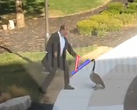Man vs. Goose