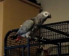 Swearing bird