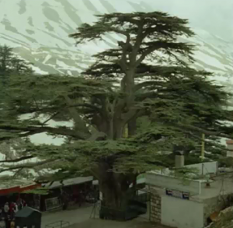 Significance and allure of the cedars of lebanon buycottarizona Images