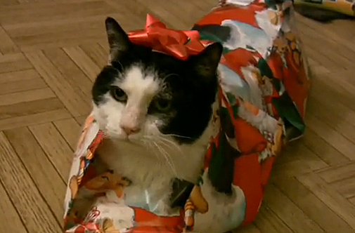 Wrapped cat