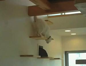 Cat apartment