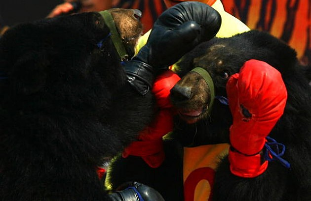 Black Bear Boxing