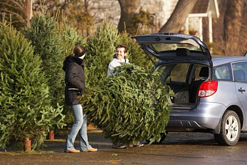 Christmas Trees Wichita Falls