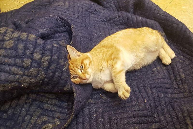 Lucky Kay the cat (credit: Sarah Bayley)